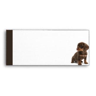Brown Dachshund Puppy Envelope