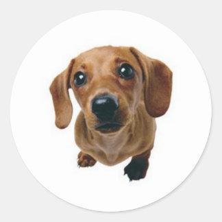 Brown Dachshund Round Sticker