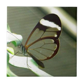 Brown de atontamiento y mariposa translúcida