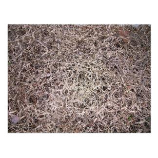 Brown dead grass texture postcard