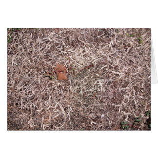 Brown dead grass, weeds, and leaves greeting card