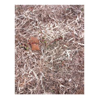 Brown dead grass, weeds, and leaves full color flyer