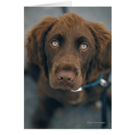 Brown Dog Card