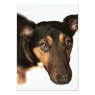 Brown Dog Invitation
