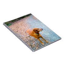 Brown Dog Notebook