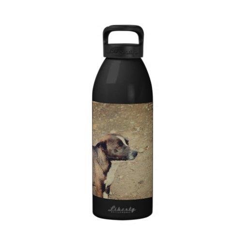 Brown dog reusable water bottles