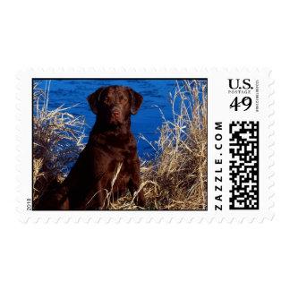 Brown Dog Stamp