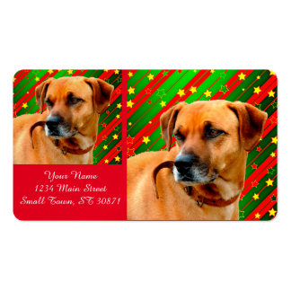Brown Dog stars Red Yellow Green Christmas    dog, Pack Of Standard Business Cards