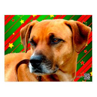 Brown Dog stars Red Yellow Green Christmas Postcard