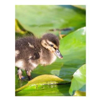 Brown duckling walking on water lily leaves letterhead