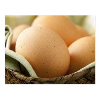 Brown Eggs Postcard