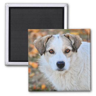 Brown eyed dog refrigerator magnet