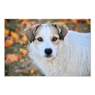 Brown eyed dog photographic print