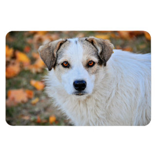Brown eyed dog magnet