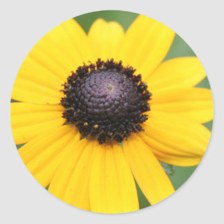 Brown Eyed Susan products Classic Round Sticker