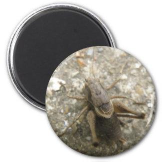Brown Field Cricket Magnet