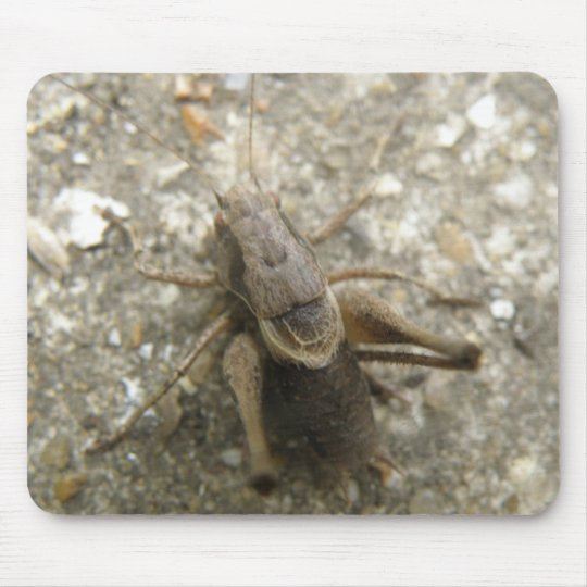 Brown Field Cricket Mousepad
