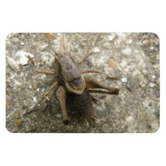 Brown Field Cricket Premium Magnet