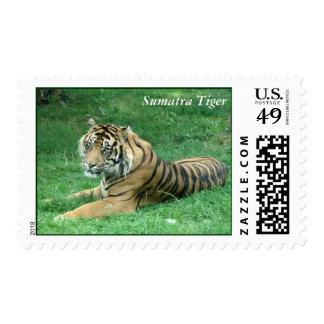 Brown Fur Black Stripes Tiger Sitting Stamp
