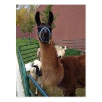 Brown Fuzzy Llama Postcard