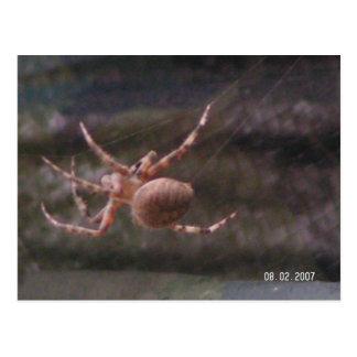 Brown Garden Spider Postcard