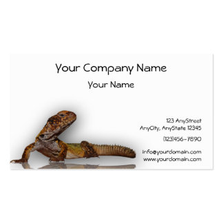 Brown Gecko on White Background Business Card Templates