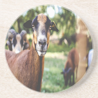 Brown Goat Beverage Coasters