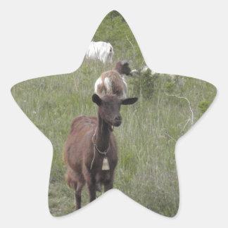 Brown Goat Star Sticker