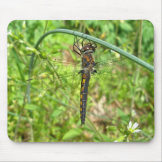 Brown Gold Dragonfly Mousepad