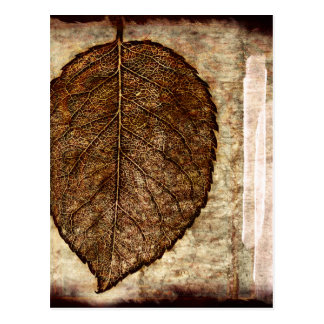 Brown Gold Fall Leaves Postcard