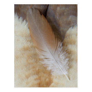 Brown Goose Feather Still Life Postcard