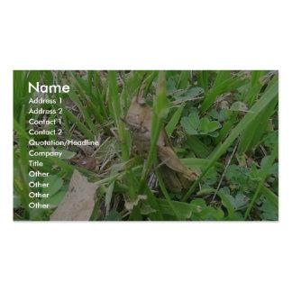 Brown Grass Hopper Hiding In Green Grass Business Cards
