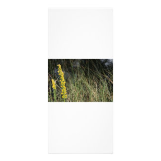 Brown green grass background design photo personalized rack card
