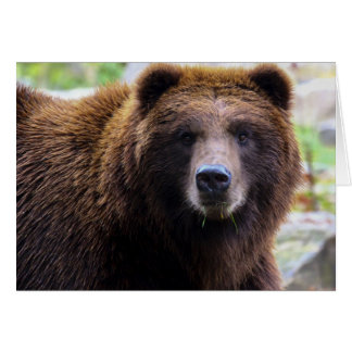 Brown Grizzly Bear Greeting Card