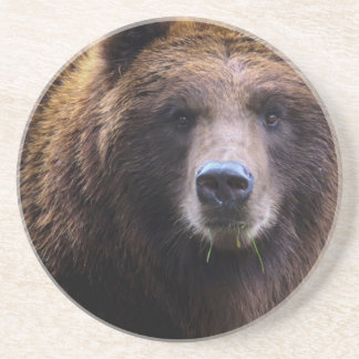 Brown Grizzly Bear Drink Coaster