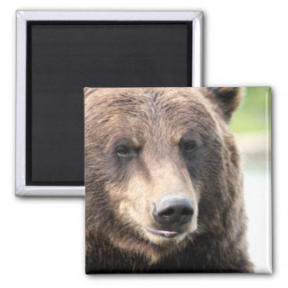 Brown Grizzly Bear Magnet