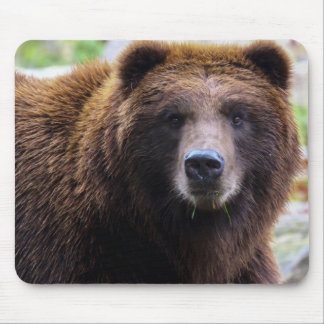Brown Grizzly Bear Mouse Pad