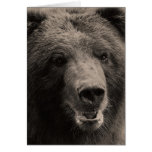 Brown Grizzly Bear Wildlife Photo Card