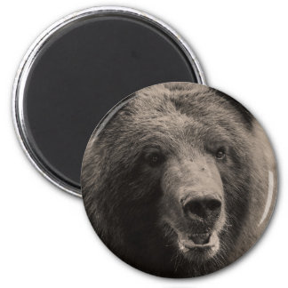 Brown Grizzly Bear Wildlife Photo 2 Inch Round Magnet