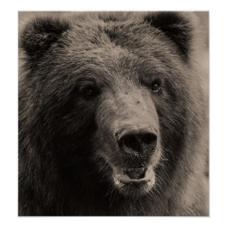 Brown Grizzly Bear Wildlife Photo Poster
