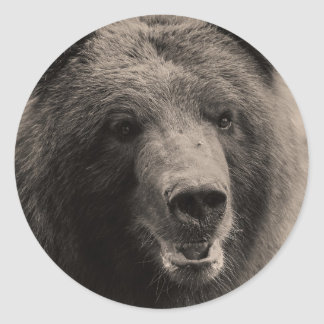 Brown Grizzly Bear Wildlife Photo Classic Round Sticker