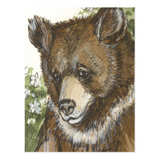 Brown Grizzly Cub Postcard