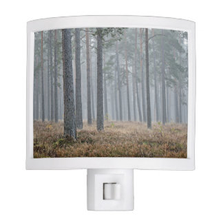 Brown Ground In The Forest With Fog Night Light