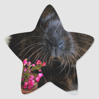 Brown Guinea pig with Purple Flowers Star Sticker