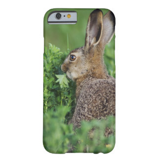 Brown Hare, Lepus europaeus, young eating, Barely There iPhone 6 Case