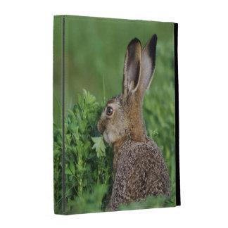 Brown Hare, Lepus europaeus, young eating, iPad Folio Covers