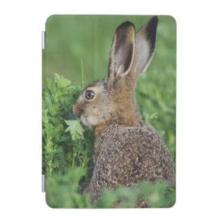 Brown Hare, Lepus europaeus, young eating, iPad Mini Cover