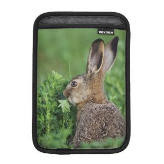 Brown Hare, Lepus europaeus, young eating, iPad Mini Sleeve