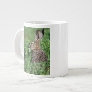 Brown Hare, Lepus europaeus, young eating, Large Coffee Mug