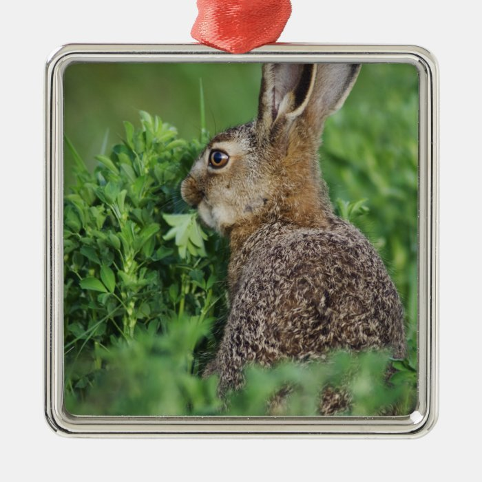 Brown Hare, Lepus europaeus, young eating, Metal Ornament